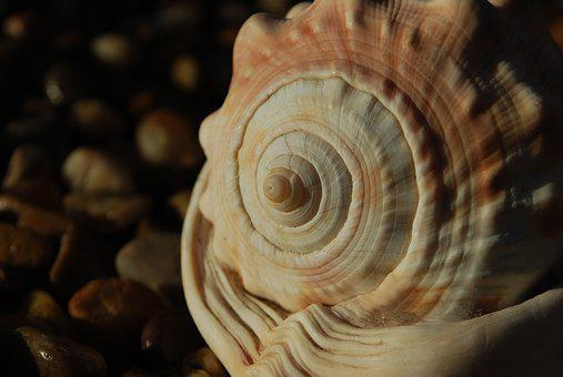 Fibonacci, Spiral, Seashell, Spiritual, Science, Ratio