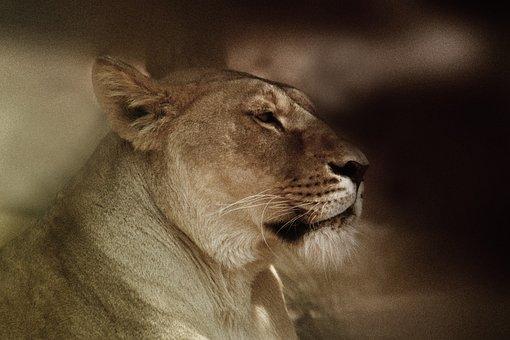 Sigean, Leon, Animals, Nature