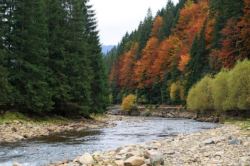 Mountains, Small River, Fast, Flows, Stones, Forest