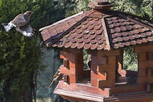 Sparrows, Bird, Nature, Feeder, Telephone, Animal