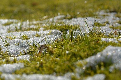 Grass, Snow, Spring, Light, Blade Of Grass, Nature