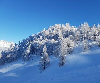 Trees, Bizarre, Blue, Spruce, Frost, Sky Blue, Season