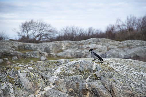 Crow, Bird, Cliffs, Coastal, Black, Animal Life, Nature