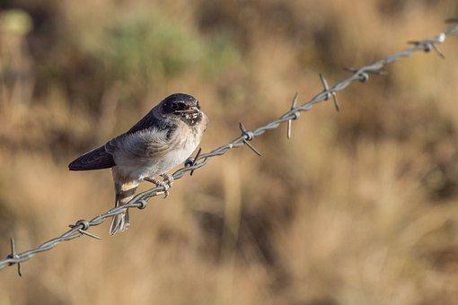 Bird, Barbed, Fence, Landscape, Wire, Wildlife