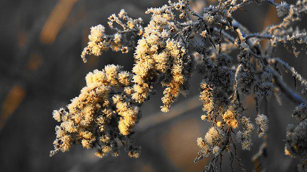Eiskristalle, Winter, Nature, Plant, Ice, Cold, Frost