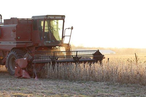 Farm, Soybean, Harvest, Agriculture, Crop, Rural, Work