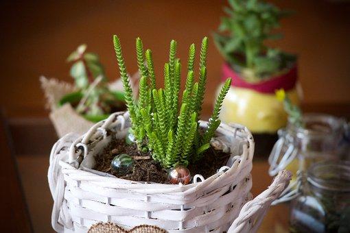 Plants, Fat Plants, Succulent Plants From Apartment