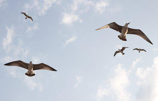 Seagulls, Flight, Birds, Sky, Freedom, Nature, Wings