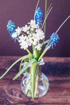 Flowers, Spring Flowers, Vase, Flower Vase, Deco