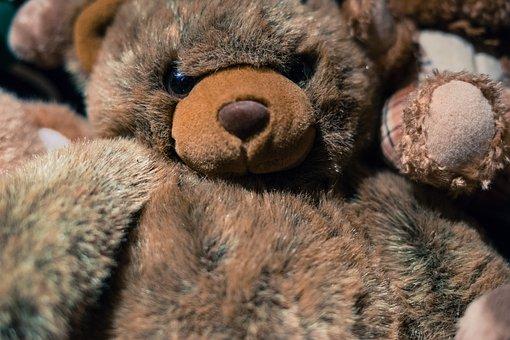Teddy, Bear, Toy, Cute, Animal, Soft, Fluffy, Brown