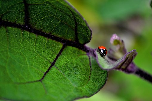 Ladybug, Red, Green, Insects, Points, Animals, Spring