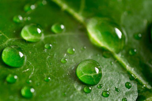 Leaf, Green, Macro, Nature, Plant, Foliage, Summer, Ivy