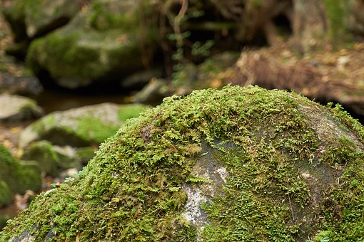 Forest, Gorge, Bach, Stone, Moss, Nature, Landscape