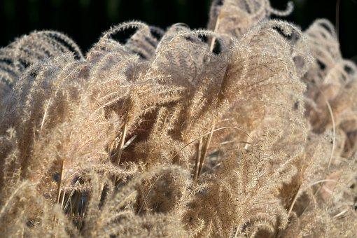 Autumn, Nature, Grass, Morning, Landscape, Foliage
