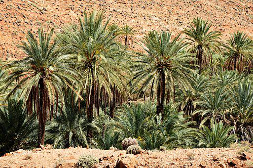 Palm Trees, Morocco, Marrakech, Landscape, Nature