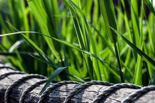 Green, Nature, Wood, Web, Railing, Plant, Reed, Bridge