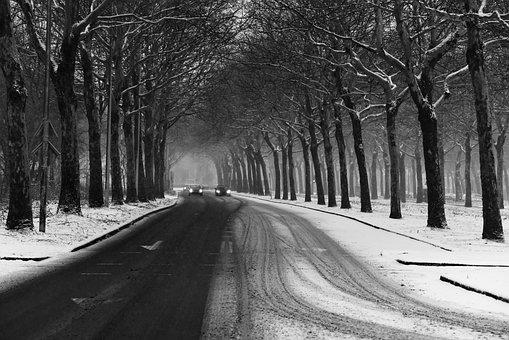 Street, Tarmac, Tree Lined, Winter, Snow, Tire Tracks