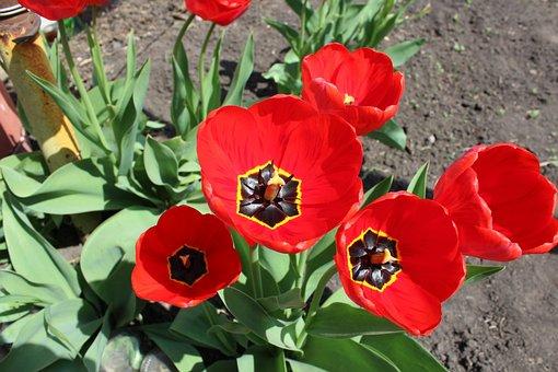 Flowers, Soil, Flora, Mack, Spring
