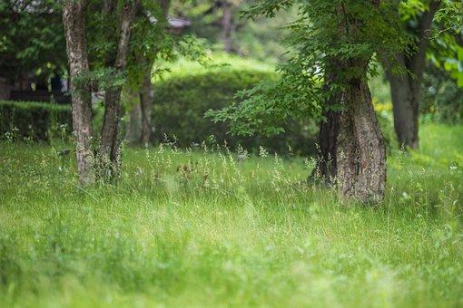Prairie, Tree, Bush, Nature, Landscape, Wood, Grass