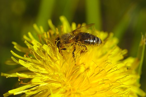 Bee, Flower, Yellow, Insect, Nature, Pollen, Almost