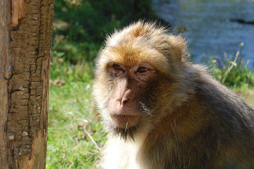 Monkey, Careful, Zoo, Nature, In Mammals, Wild, Animals