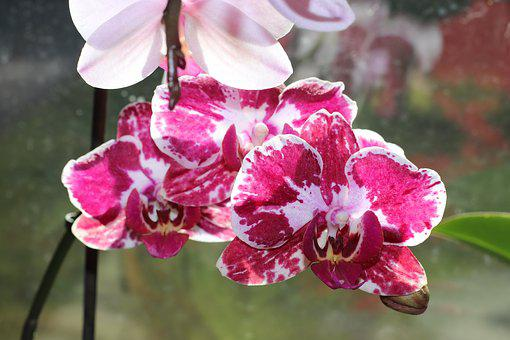Flower, Orchid, Orchid Flower, Bloom, Houseplant