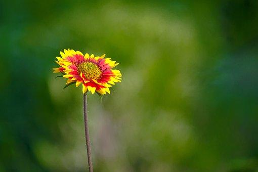 Sunflower, Flower, Tropical, Summer, Botanical, Blossom