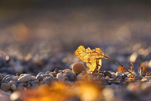 Leaves, Leaf, Decay, Break Up, Broken, Old, Pebble
