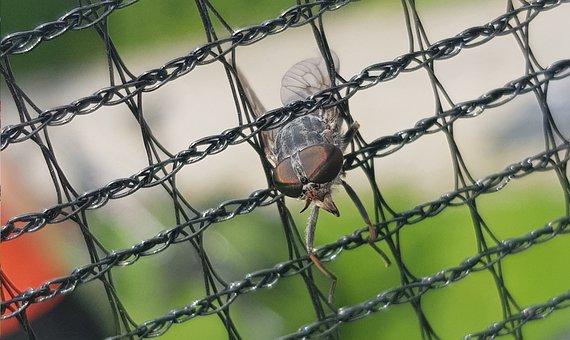 Mucha, Insect, Prison, Macro, Nature, Eyes, Eye, Wing