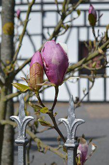 Spring, Spring Day, Flowers, Spring Flower, Bloom