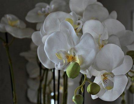 Orchids, Flowers, Flower, Plant, Houseplants