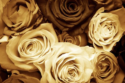 Roses, Flowers, Love, Vintage, Sepia, Valentine's Day