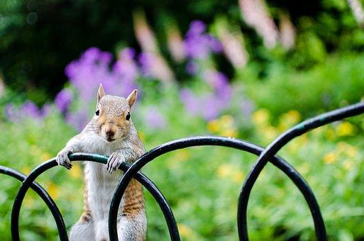 Squirrel, Fence, Flowers, Meadow, Animal World, Furry