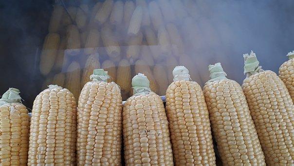 Egypt, Food, Grain, Barley, Harvest, Arable, Corner
