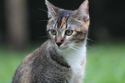 Kitten, Look, To Watch, Feline, Cute, Hairy, Portrait