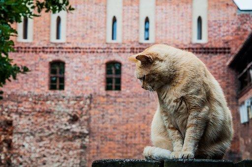 Cat, Sitting, Fur, Lake Dusia, Wall, Brick, Castle