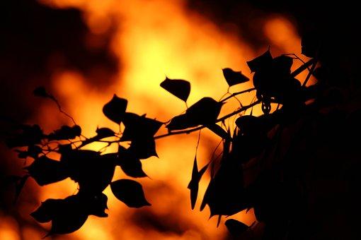 Nature, Leafs, Burn, Heat, Ground, Land, Canon