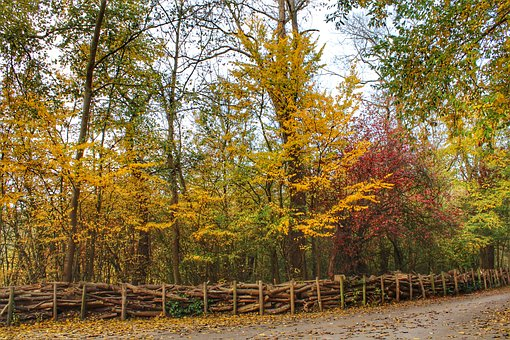 Leaves, Autumn, Colorful, Trees, Path, Landscape