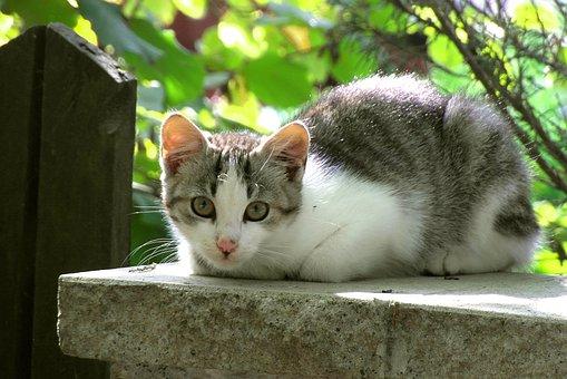 Cat, Mammal, Animals, Dachowiec, Sitting, Murek