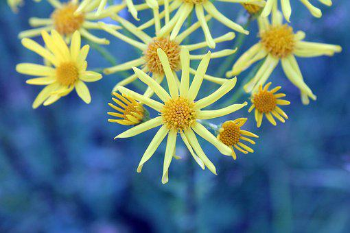 Flowers, Yellow, Blue, Nature