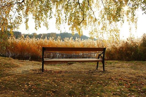 Bench, Autumn, Nature, Park, Romantic, Rest Stop