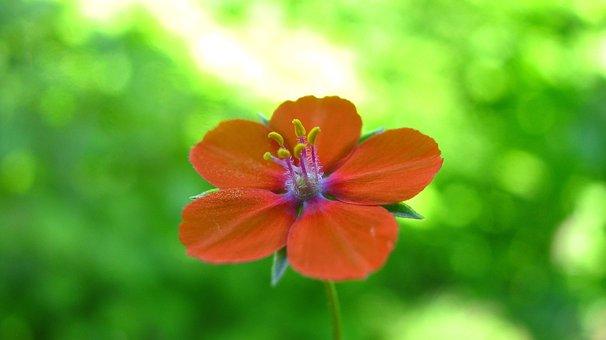 Tiny, Orange, Flower, Nature, Green, Plant, Macro