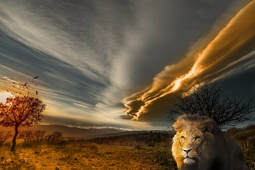 Lion, Animal, Prairie, Landscape, Sun, Tawny, Wild