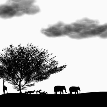 Safari, Animal, Park, Silhouette, Giraffe, Elephant