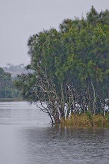 Lake, Bay, Trees, Grey, Water, She Oaks, Island
