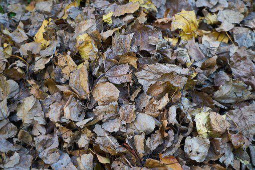 Autumn, The Leaves Are, Winter, Park, Wet, Texture