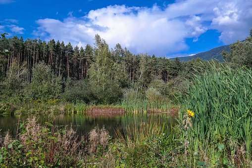 Zussis Biotope, South Tyrol, Water, Pond