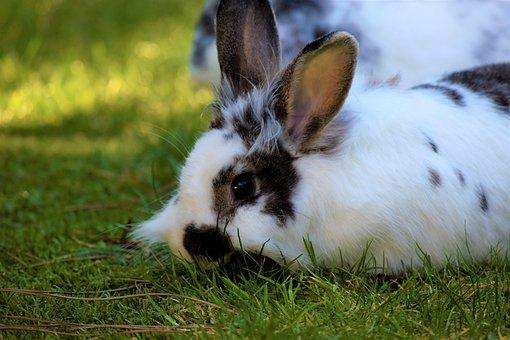 Rabbit, Hare, Animal, Cute, Nature, Animal World, Grass