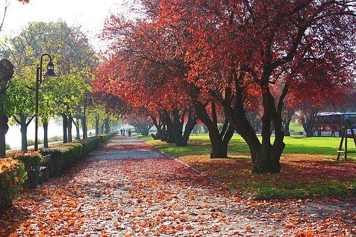 Autumn, Colorful, Fall Foliage, Away