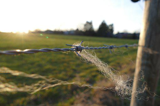 Barbed Wire, Fence, Wire, Pointed, Barbed Wire Fence